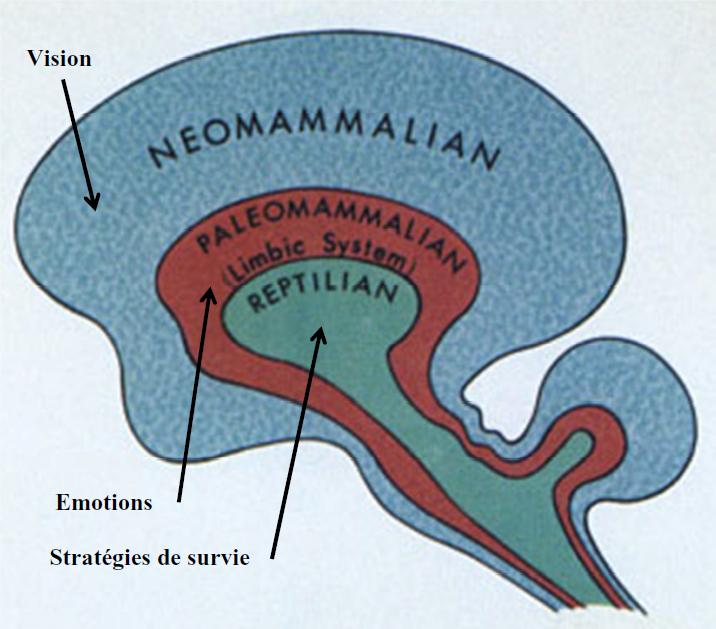 Trois-cerveaux-PNL