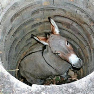 Ane puits