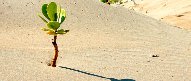 Plante résiliente