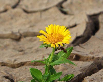 fleur dans le desert