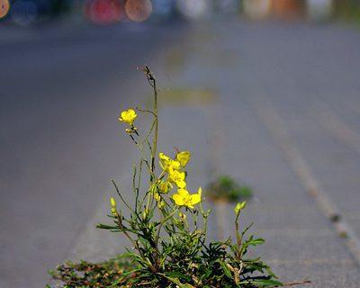 plante résilente