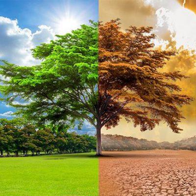 Ecologie, climat et PNL